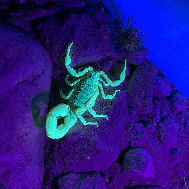 En lo que pensamos, nos convertimos. 🐢📸🐢📸🐢📸🐢 •#River •#Photography •#Photographer •#Picture •#Fishing •#Natural •#Naturaleza •#Nature •#Tourtlephoto •#Animalsphoto •#Besttourtle •#Tourtle •#Tourtleofinstagram •#Tourtle🐢 •#Tourtlephoto •#Besttourtleshot •#Animals •#Pecheur •#Animalsphotography •#Tourtlephotography •#Tourtles🐢 •#Outdoors •#Climbing •#Rockclimbing •#Mountain •#Travel •#Reptile •#Chulilla •#Reptiles